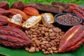 UNOCACE - Pruebas para la compra de cacao en mazorcas