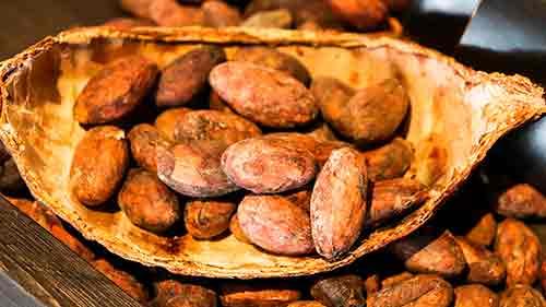 UNOCACE - Productos: Cacao en grano Nacional Fino de Aroma, Cacao en grano CCN51